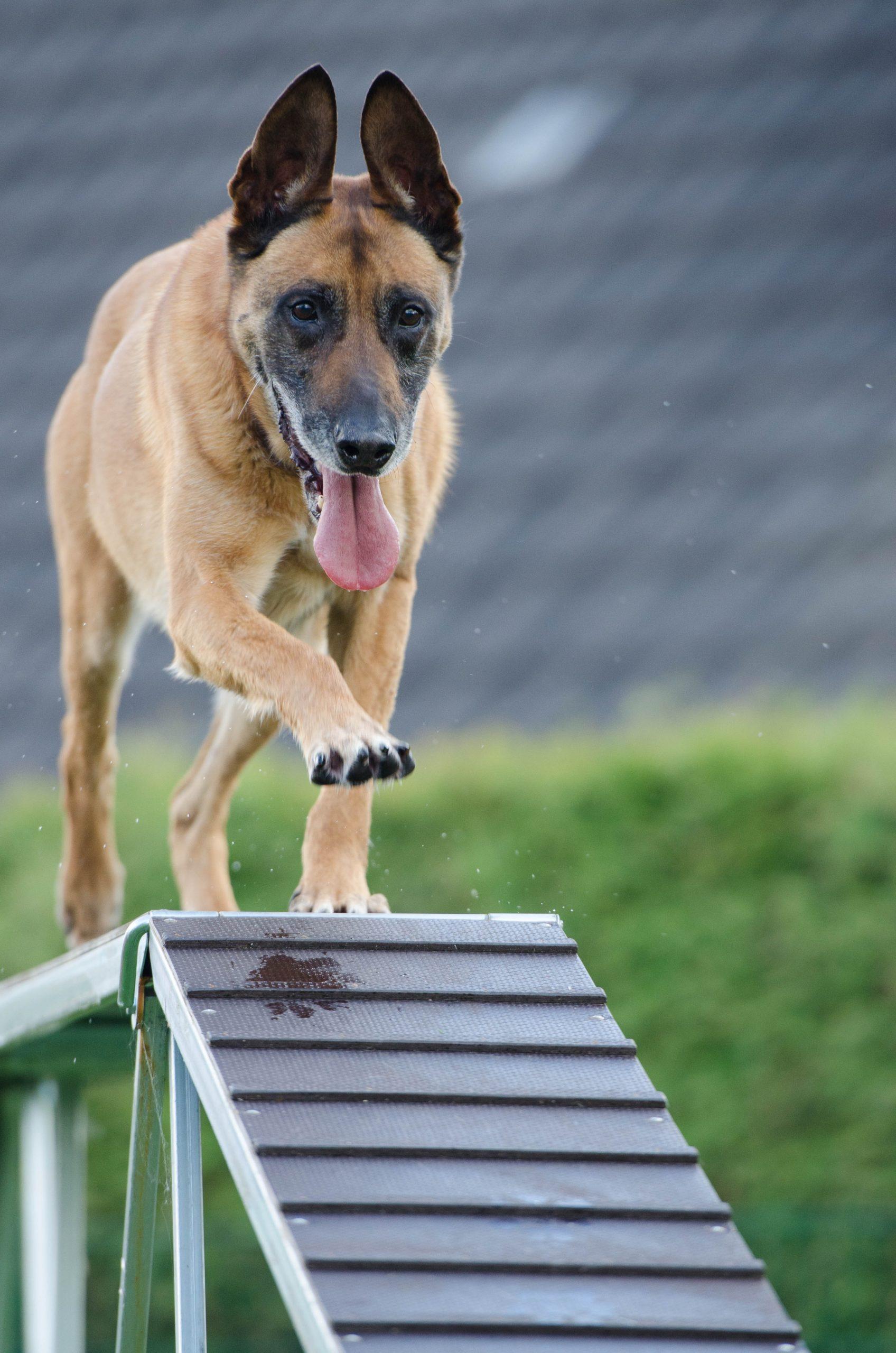 A kutyafuttatók íratlan szabályai